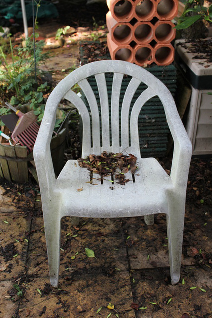 Leaves on Chair