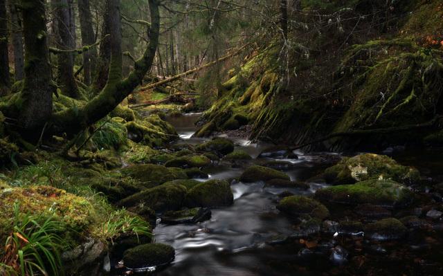 Ravens Rock Gorge, Rosehall, Sutherland, Scottish Highlands
