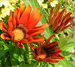 Fleurs au carré