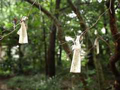 Fortune slips tied on tree branches