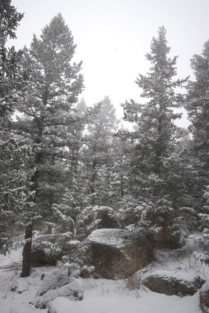 Snow and Rocks and Trees and Fog