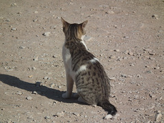 Another Ephesus-ian cat