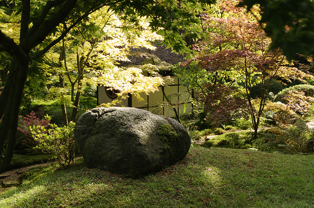 A Boulder Amongst the Acers