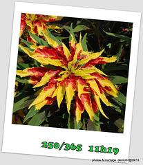 06/09   fleurs de feu..???