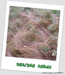 08/09   mince quel vent j'suis tout décoiffé !