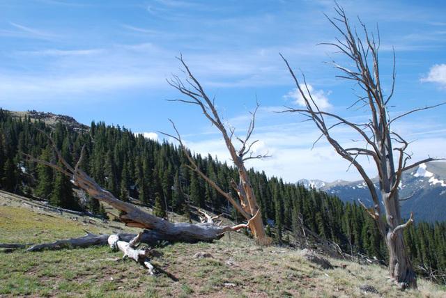 Dead Tree Combat
