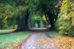 Autumn, Clashmore, Dornoch, Sottish Highlands