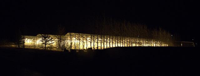 Midnight Gardening at the Mars Colony