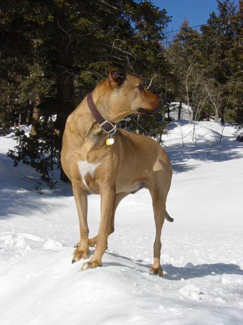 Artan on the Snowbank