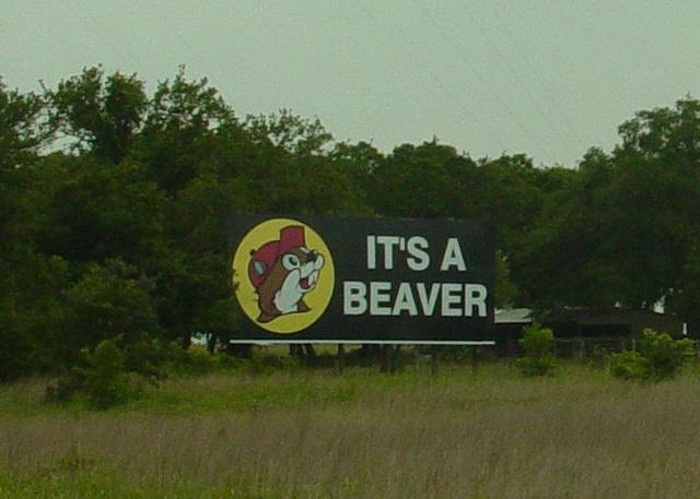 It's a Beaver