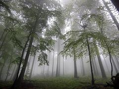 Eifel, Ahrtal