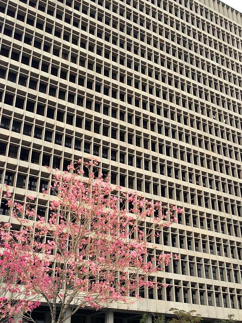 Springtime in L.A.