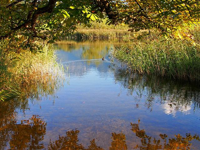 Le petit lac avec un canard
