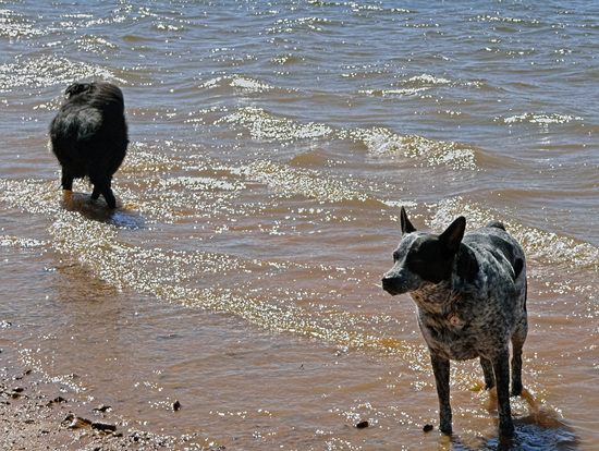 21 Flicka & Lucas on the shore at Lake Arbuckle 24-9-13
