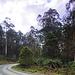 Gippsland forests
