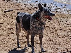 24 Flicka  on the shore at Lake Arbuckle 24-9-13