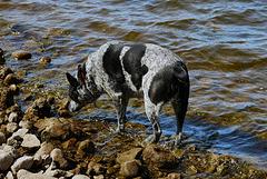 26 Flicka on the shore at Lake Arbuckle 24-9-13