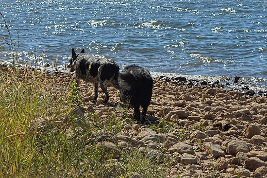 28 Flicka & Lucas on the shore at Lake Arbuckle 24-9-13