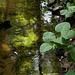 20140520 3499VRAw [D~DU] Bach, 6-Seenplatte, DU-Wedau