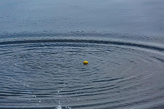 20140520 3445VRAw [D~DU] Ball-Wasserringe, 6-Seenplatte, DU-Wedau
