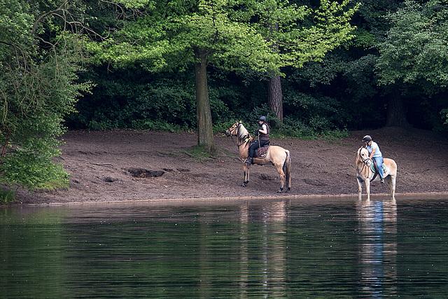 20140520 3442VRAw [D~DU] Haflinger, 6-Seenplatte, DU-Wedau