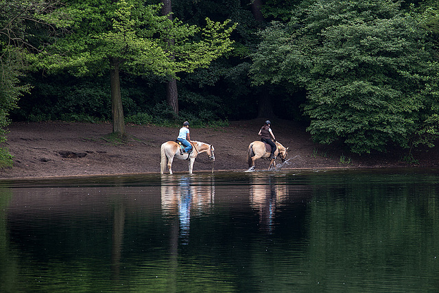 20140520 3429VRAw [D~DU] Haflinger, 6-Seenplatte, DU-Wedau