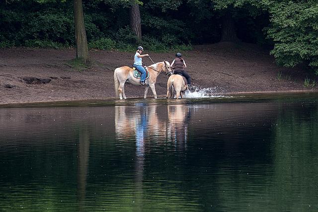 20140520 3427VRAw [D~DU] Haflinger, 6-Seenplatte, DU-Wedau