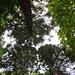 20140520 3399VRAw [D~DU] Mammutbäume, 6-Seenplatee, DU-Wedau
