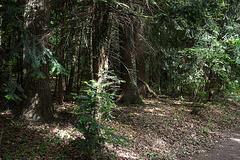 20140520 3397VRAw [D~DU] Wald, 6-Seenplatte, DU-Wedau