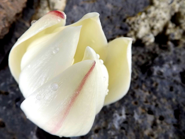 Flores en octubre