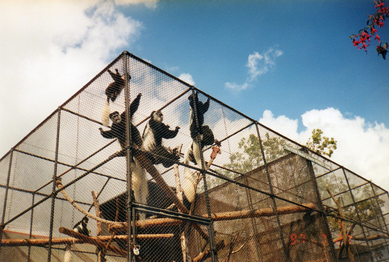 These monkeys are very exuberant