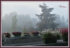 Un peu de brouillard ce matin ! mais le soleil va bientôt percer