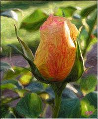 Rose au crayons de couleurs