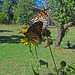 Two Monarch butterflies (Danaus plexippus) 30-9-2013