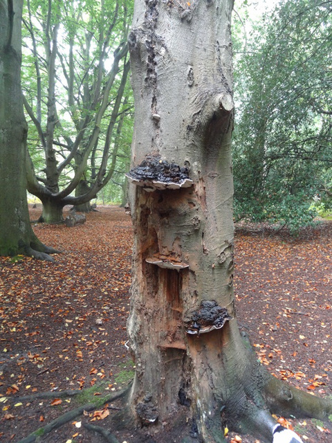 Fungi in the woods