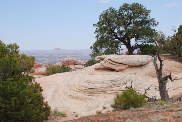 Dead Tree and Swirls
