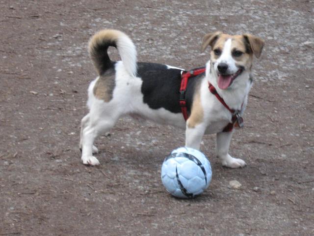 Felix mit Ball