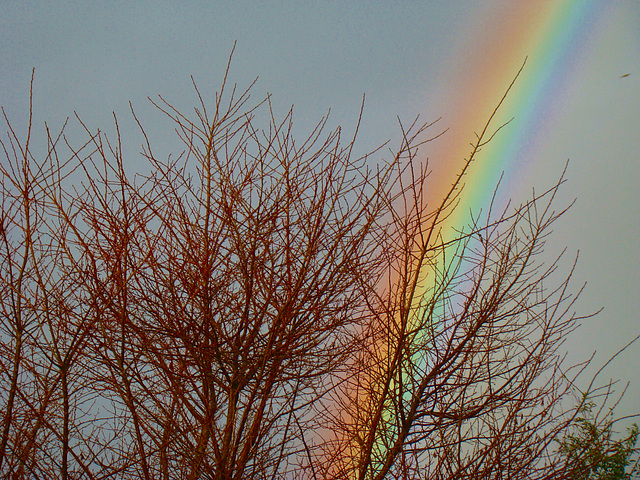 Rainbow behind our tree