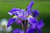 Iris Explore