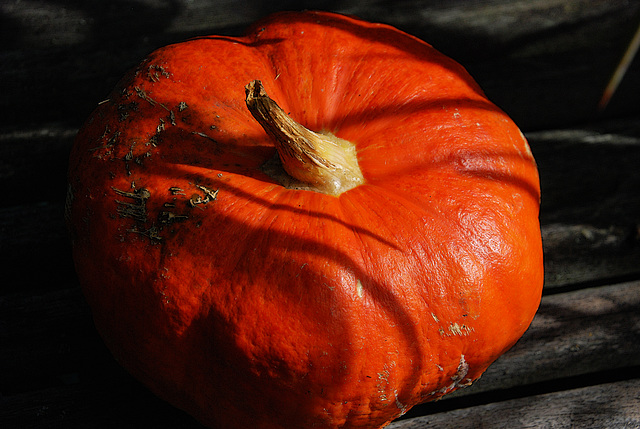 Potiron innocent sauvé du massacre d'Halloween