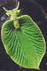 plantobesto (Pflanzentier)