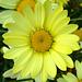 yellowagain