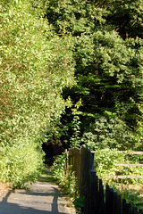 vojo enarbaren (Weg in den Wald)