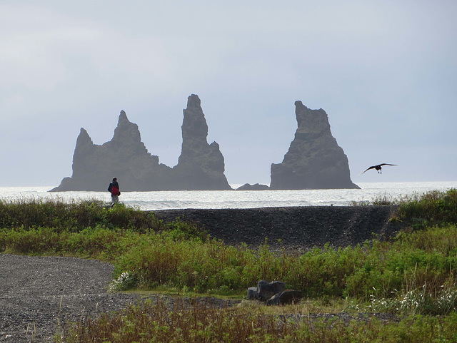 Black beach at Vik, Iceland
