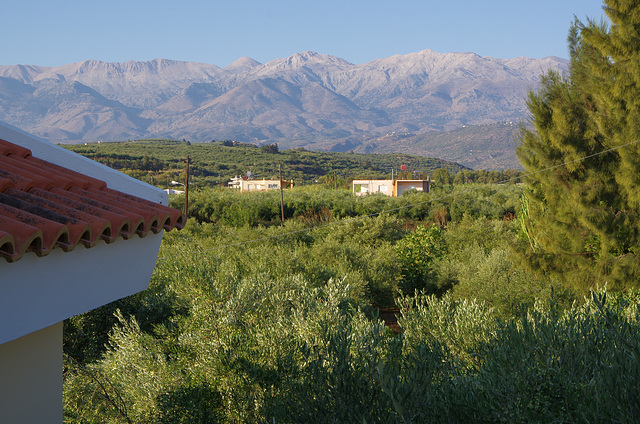 White Mountains and Olive Trees