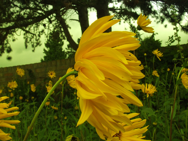 Yellow blowing in the wind
