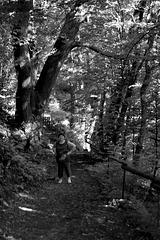 Donjo  en  sorĉita arbaro (Donjo in einem verzauberten Wald)