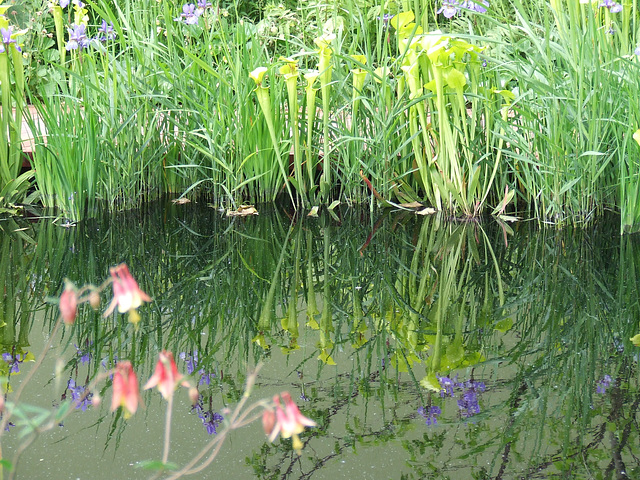 Carnivorous plants in reflective mood