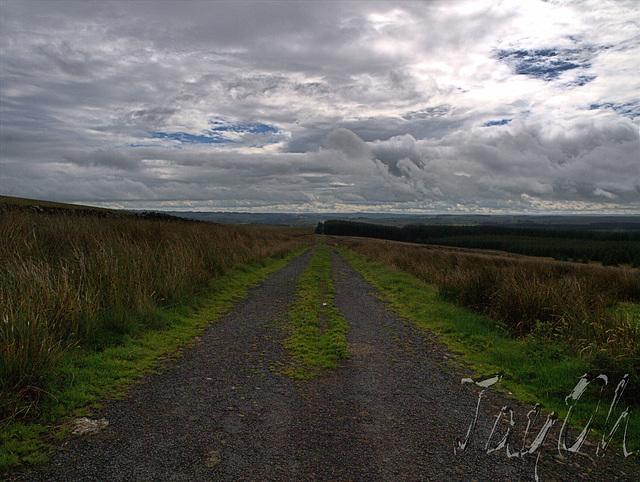 Damp, Windswept Upland Moors