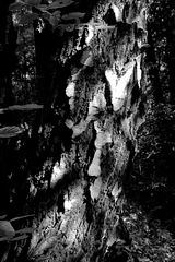 arbara fantomo (Waldgespenst)
